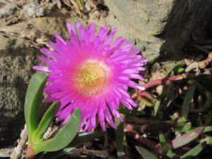 Blume Strand Sydney