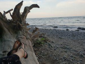 Strand mit Treibholz