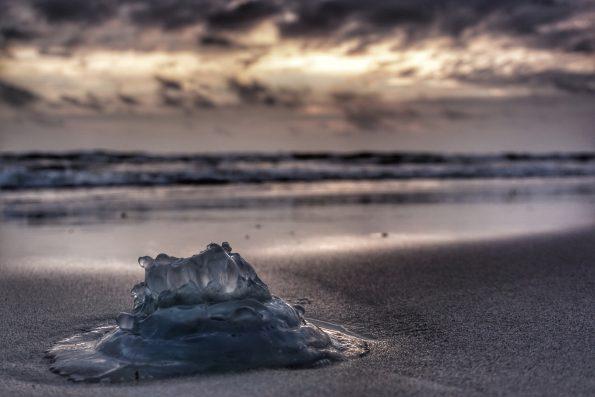 Jellyfish_Qualle_Instagram_mit Filter